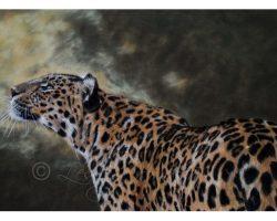 cramurleopard_fin