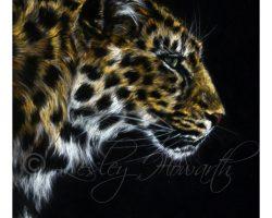 crlesleyhowarthamurleopard