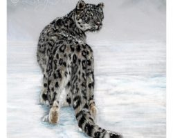 crsnowleopard2