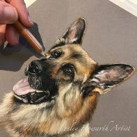 6x6 inch pastel portrait of German Shepherd Dog