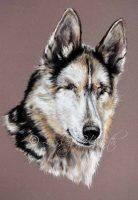 Blind sled dog pastel portrait