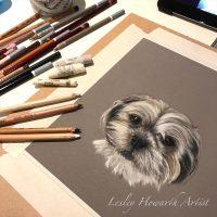 Archie pastel portrait study