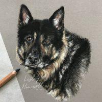 German Shepherd pastel painting portrait study