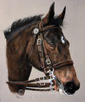 mountedhorse